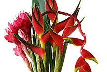 Centerpieces Bouquets / by WholeBlossoms Wholesale Wedding Flowers
