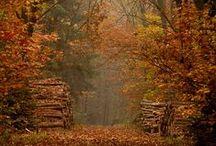 """Forêt / """" L'oeuvre de la nature est bien plus difficile à comprendre que le livre d'un poète. """"    (Léonard de Vinci)"""