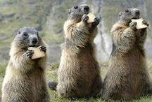 Nos amis les bêtes / « Les animaux ne manquent jamais de naturel, sauf à l'état domestique.  »    (Malcolm de Chazal)