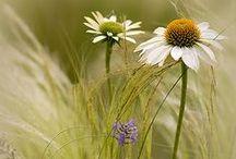 """Fleurs (1) / """"Le bout du monde et le fond du jardin contiennent la même quantité de merveilles.""""  (Christian Bobin)"""