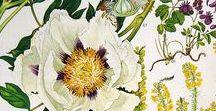 Blumen Prints aus Biologiebüchern / Blumen Scans aus alten Biologiebüchern, die sich zum Erstellen von Grafiken eignen.