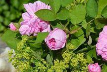 Rosige Zeiten / Rosen, rosa Rosen, Gartendekoration mit Schneckenhaus