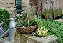 Neues von Hof 9 / Herbstdekoration mit Kürbis, alte Gartenpumpe zur Deko, Sabby Gartendekoration mit alten Zinkgefässen