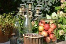 Gartenpics im September / Dekoration mit Kürbis, Gartendekoration im Herbst, Hortensien