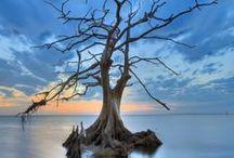 Solitude / La solitude est une tempête de silence qui arrache toutes nos branches mortes. Pourtant, elle implante nos racines dans les profondeurs du coeur vivant de la terre vivante (Khalil Gibran)