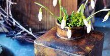 Frühlingserwachen / Frühlingserwachen, Schneeglöckchen, Frühlingsdeko, Frühling im Garten, Gartendekoration im Frühling