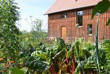 übern Gartenzaun zu Antje / Besuch in einem naturnahem Garten.