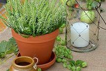 Gartenparty I. Teil / Tischdeko zur Gartenparty, Tischdekoration mit Hopfen, Tischdekoration im Herbst, Deko zur Gartenparty, Landhaus Garten