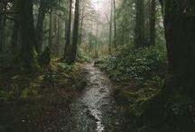 Wald / Wälder, Wiesen, Seen, Berge. Viel grün. Natur pur für alle, die die Natur ebenso lieben wie ich