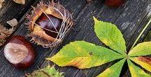 Herbstdekoration mit Kastanien / Herbstdekoration mit Kastanien, Herbstdeko