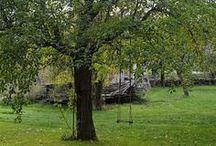 übern Gartenzaun zu Inge / Streuobstwiese, Hochbeete, Bauerngarten, Buchshecke, wilder Wein, Fachwerkhaus, Schaukel im Apfelbaum, Lampionblume, Quitten