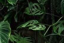 Pflanzen / Pflanzen! Jungle Inspiration! Monstera, Farn, Gräser - alles, was grünt und zum urban jungle passt.