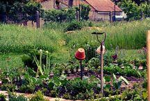 Bauerngarten / Bauerngarten, Bauerngarten anlegen, Landleben