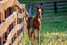 Hold Your Horses! / The most beautiful creatures God created! / by D McManus