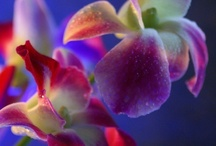 Orchids / My favourite flower!