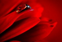 """Red / """"Red is the ultimate cure for sadness."""" --Bill Blass"""