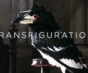 "◬ transfiguration / Transfiguration is a core class and subject taught at Hogwarts School of Witchcraft and Wizardry. It teaches the art of changing the form and appearance of an object. There are also many branches, including Cross-Species Transfiguration and Human Transfiguration. This type of magic is regarded as ""very hard work"" and is ""more scientific"" than any other subject. One has to get it exactly right for the transfiguration to be successful."