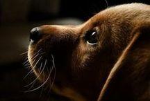 Puppy Power!!!!!