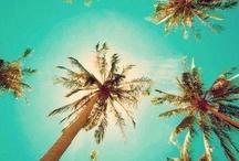 Tropiques / Une impression tropicale / by Anne So