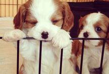 Pups / by Ashley Miozzi