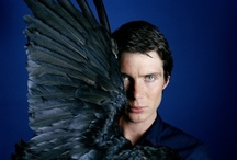 Cillian Murphy / by _ LCube