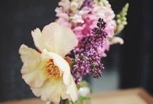 Les Fleurs / by Laura Falconer