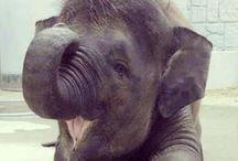 Animal Kingdom / Aaaaahhhhhhhh so sweet
