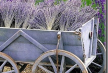 Redecorating Ideas / Creating a French Country style  / by Debbie Springsguth