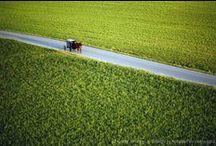 Amish / by redbarn