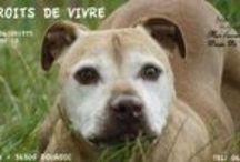 L'association DROITS DE VIVRE / Notre refuge
