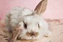 Animals: Sweet