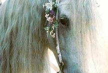Animals * Horses