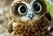 Animals * Owls