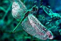 Animals * Dragonfly