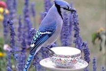 Animals * Birds