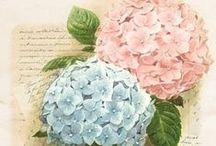 Flowers * Hydrangea