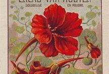 Flowers * Hibiscus