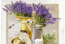 Flowers * Lavender