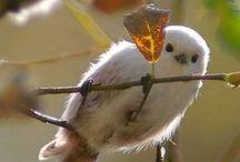 Birds / 鳥