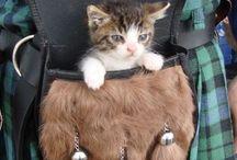 Sporran/Sgian dugh / Small Bag, Belt Pouch for Kilt(´ω ` )(incl. suggestion)