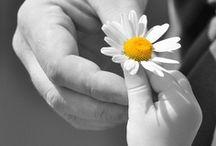 Bring me flowers ✿⊱╮