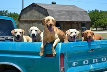 Furry Fans / While animals love going for a ride, they pre-fur to ride in a Ford.