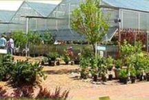 Great Garden Centers / Great Garden Centers are more than plant shops-they are destinations for a garden experience!