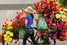 Dê Lírios_bikeshop / .cores & aromas.