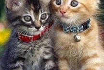 Koty dzikie i domowe