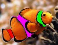 Egzotyczne ryby