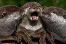 Otters / otters forever