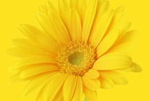the color YELLOW / by Kay Parker