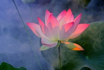 Flora: Flowers