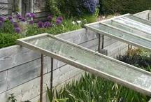Flora: Vegetable garden